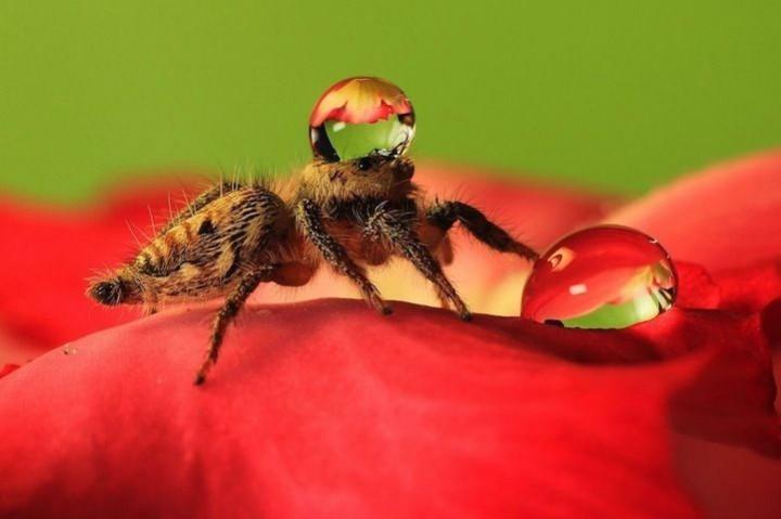 красивые макро фотографии пауков (5)