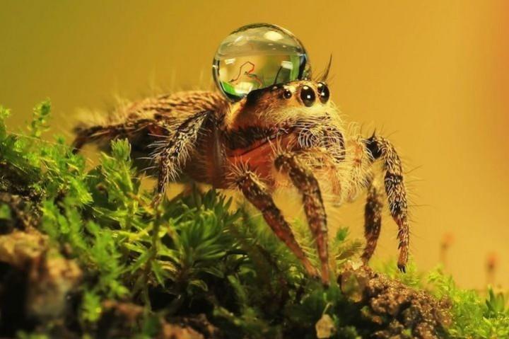 красивые макро фотографии пауков (4)
