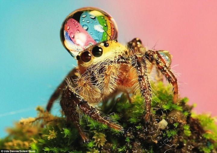 красивые макро фотографии пауков (3)