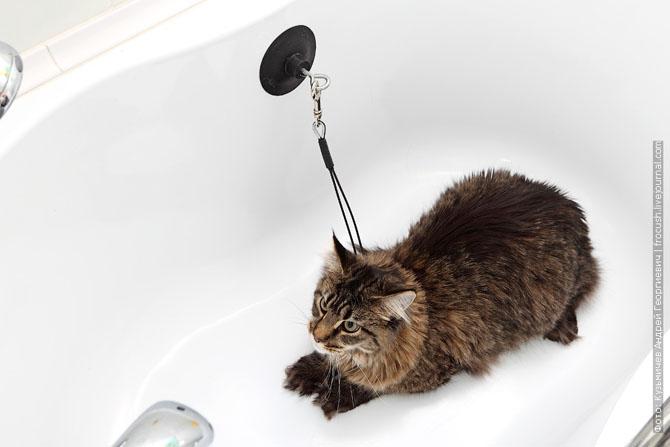 Как нужно правильно мыть кошку, как помыть кошку (2)