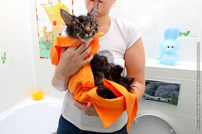 Как нужно правильно мыть кошку, как помыть кошку (21)
