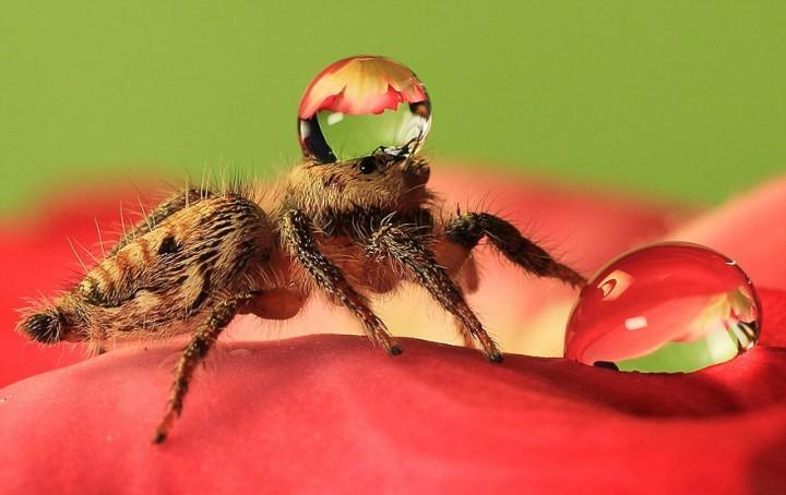 красивые макро фотографии пауков (2)