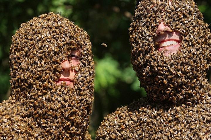 Фото пчелиных бород, экстрим (1)