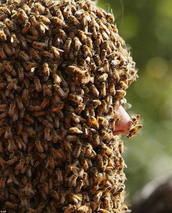 Фото пчелиных бород, экстрим (4)