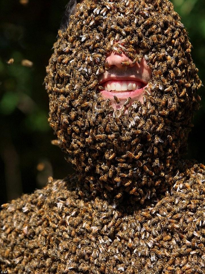 Фото пчелиных бород, экстрим (2)
