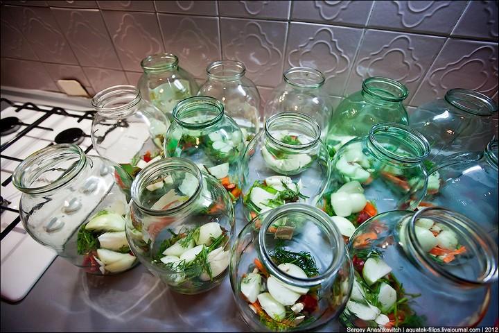 Как засолить помидоры, пошаговая инструкция с фото (6)