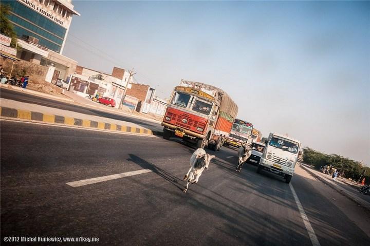 Шок, восторг и паника! — это Индия, детка. Фото Индии (20)