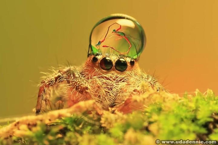 красивые макро фотографии пауков (1)