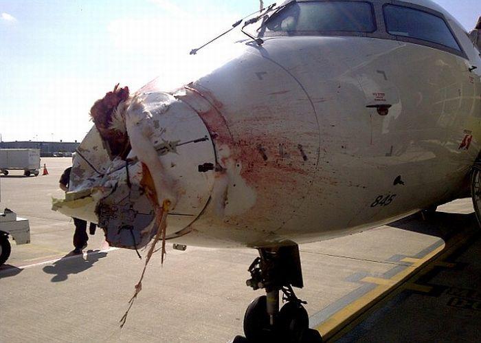 Столкновение пассажирского самолета с журавлем (2)