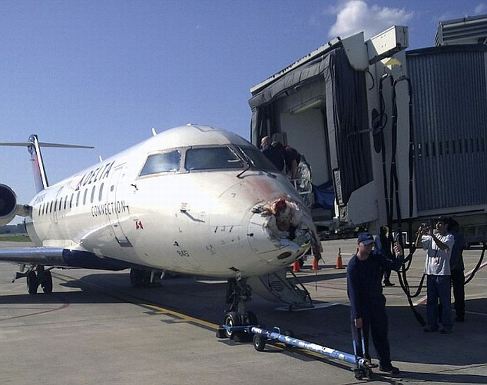 Столкновение пассажирского самолета с журавлем (1)