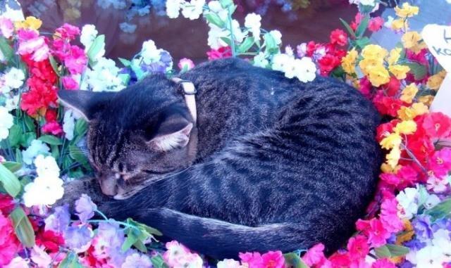 Одесский кот попрошайка (3)