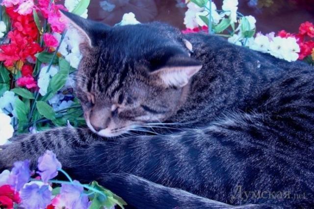 Одесский кот попрошайка (4)