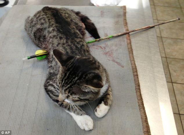 Хулиганы прострелили кота из арбалета (1)