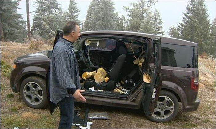 Медведи растерзали салон автомобиля (1)