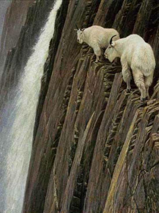 Горные козлы экстремалы (17)