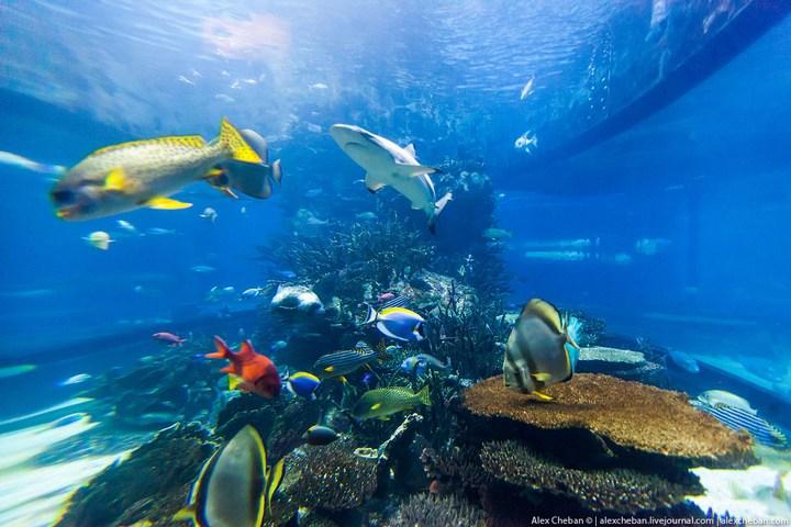 Необычный ресторан-аквариум в отеле «Бурж Аль Араб» (5)