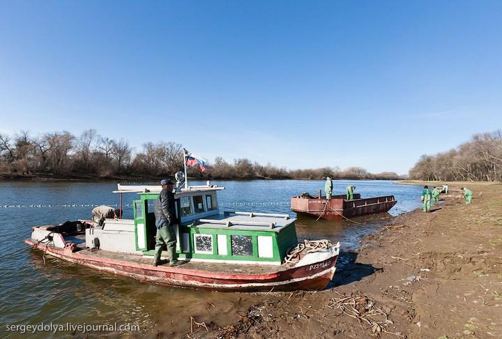 Как ловят рыбу в Астрахани (7)