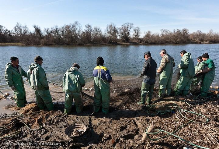 Как ловят рыбу в Астрахани (12)
