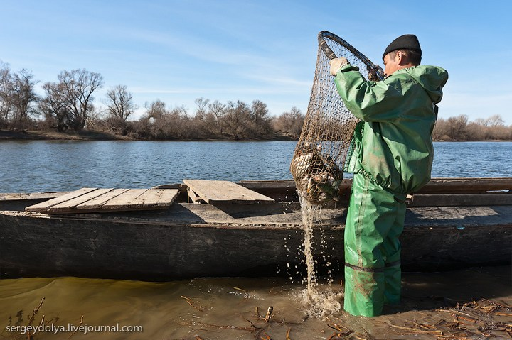 Как ловят рыбу в Астрахани (15)