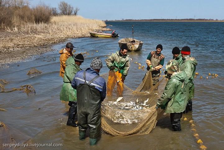 Как ловят рыбу в Астрахани (17)