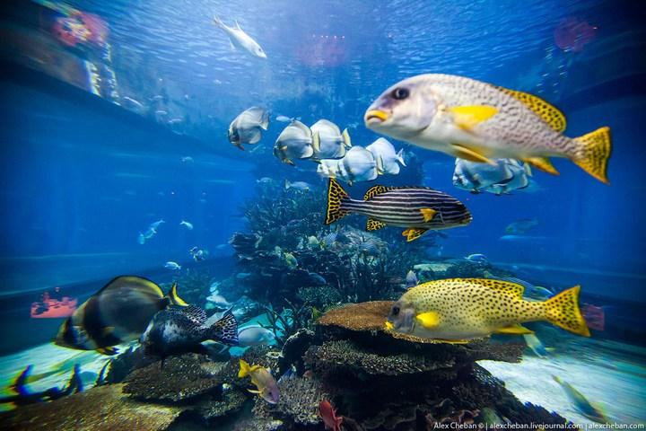 Необычный ресторан-аквариум в отеле «Бурж Аль Араб» (17)