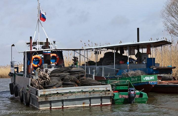Как ловят рыбу в Астрахани (22)