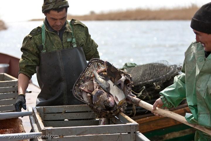 Как ловят рыбу в Астрахани (27)