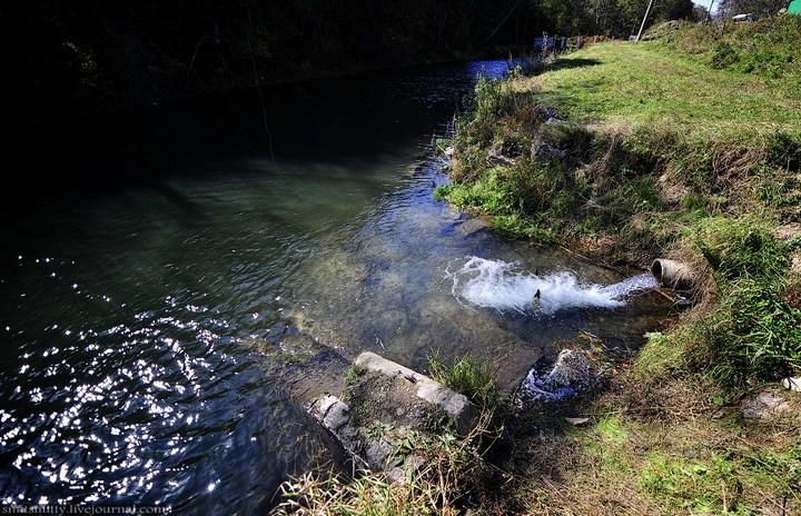 Как разводят лосося, кету, добыча икры лососёвых (41)