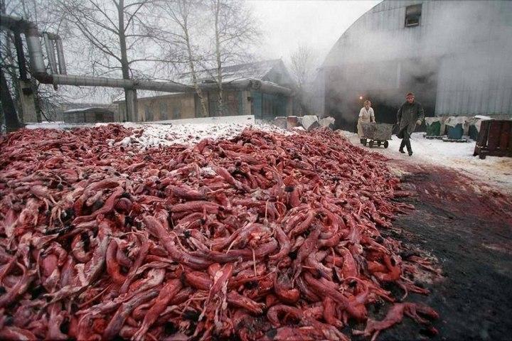 Как делают меховые изделия, как убивают животных