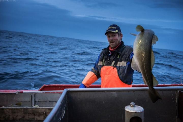 Как ловят треску в Норвегии (15)
