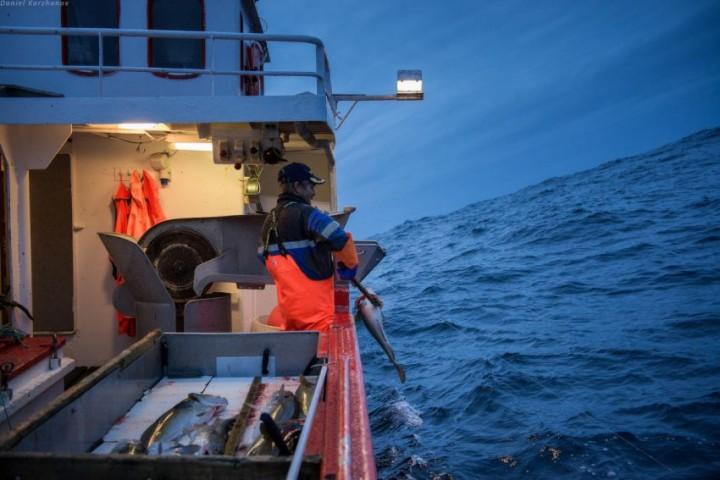 Как ловят треску в Норвегии (16)