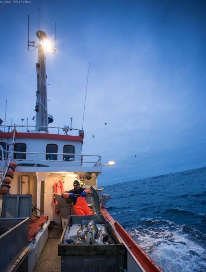 Как ловят треску в Норвегии (22)