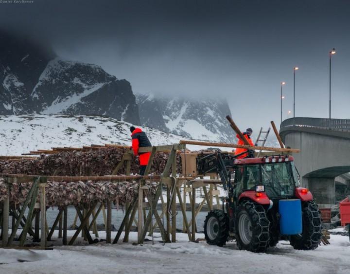 Как ловят треску в Норвегии (28)