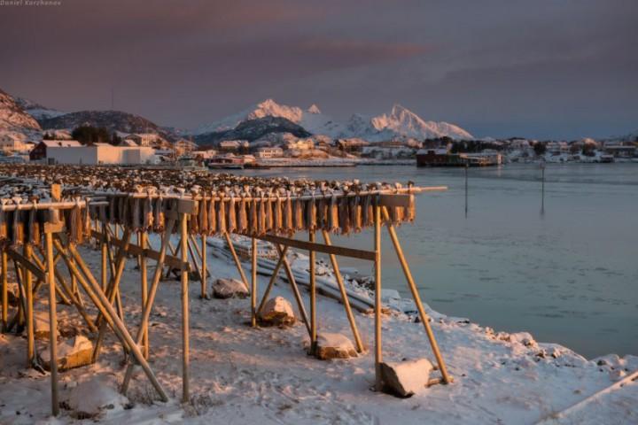 Как ловят треску в Норвегии (31)