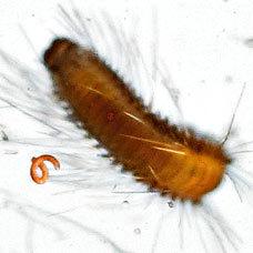 Из каких микроорганизмов состоит планктон (6)