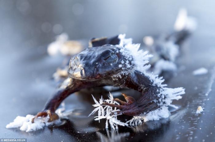 Остаться в живых или история о замерзшей лягушке (2)