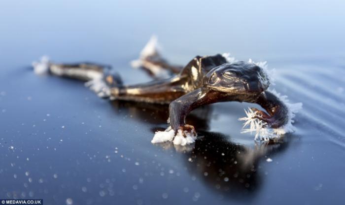 Остаться в живых или история о замерзшей лягушке (3)