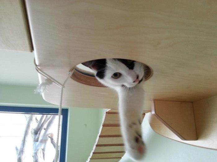 Игровая мебель для кошек (6)