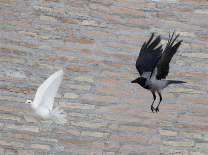 Необычный случай с белыми голубями мира Папы Римского Франциска (3)