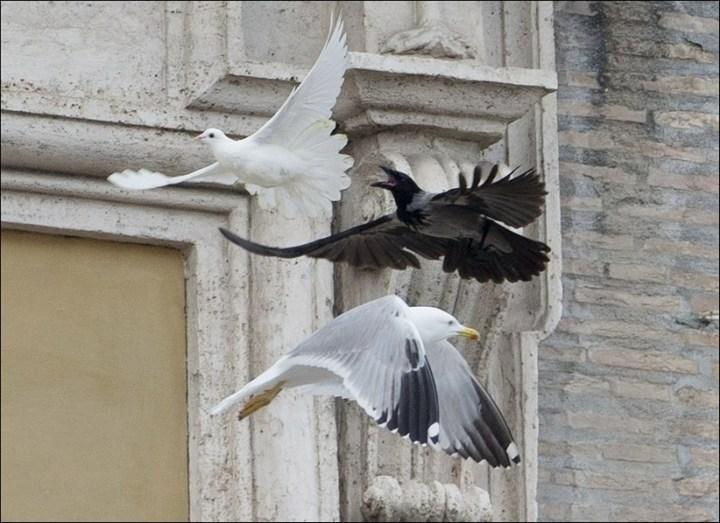 Необычный случай с белыми голубями мира Папы Римского Франциска (4)