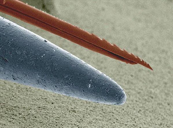Кончик иголки и жало пчелы под электронным микроскопом