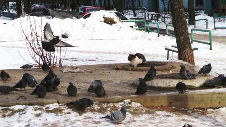 Наглый кот (2)