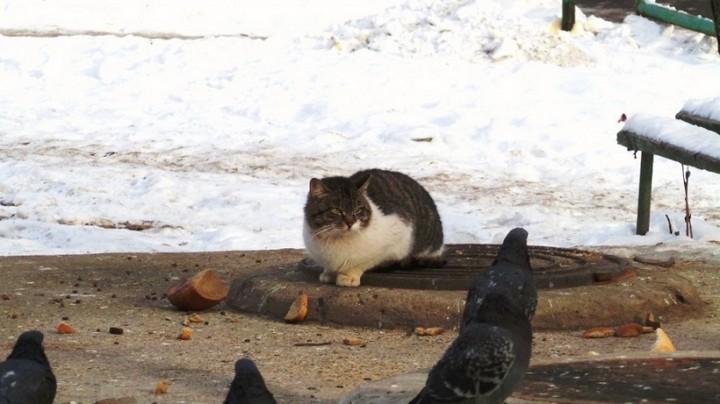Наглый кот (4)