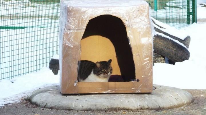 Наглый кот (6)