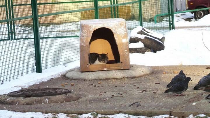 Наглый кот (8)
