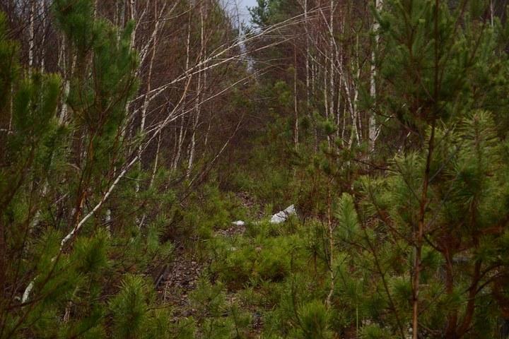 Нелегальный поход в Припять, как своими силами добраться до Припяти (11)