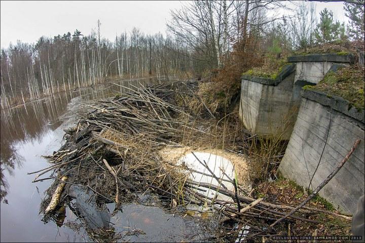 Нелегальный поход в Припять, как своими силами добраться до Припяти (16)