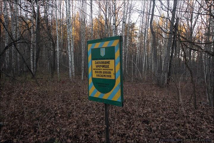 Нелегальный поход в Припять, как своими силами добраться до Припяти (39)