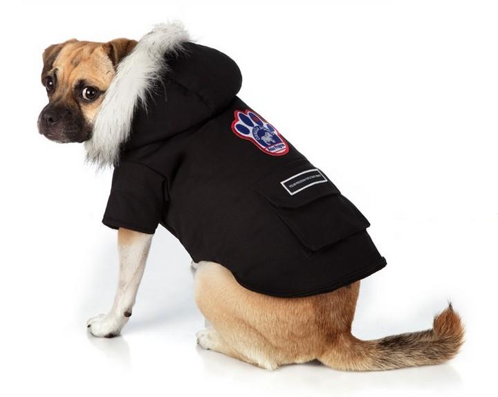 Зачем нужна одежда для собак? (2)
