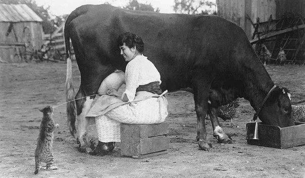Корова, доярка и кот. США 1921 год
